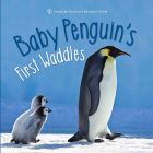 AMNH Baby Penguin's First Waddles