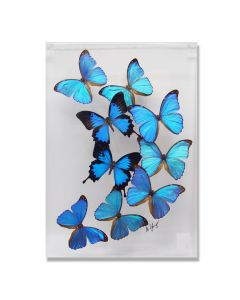 Butterfly Flight Framed Blue Morpho Butterflies