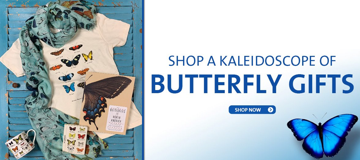 Shop the Butterfly and Insect Collection